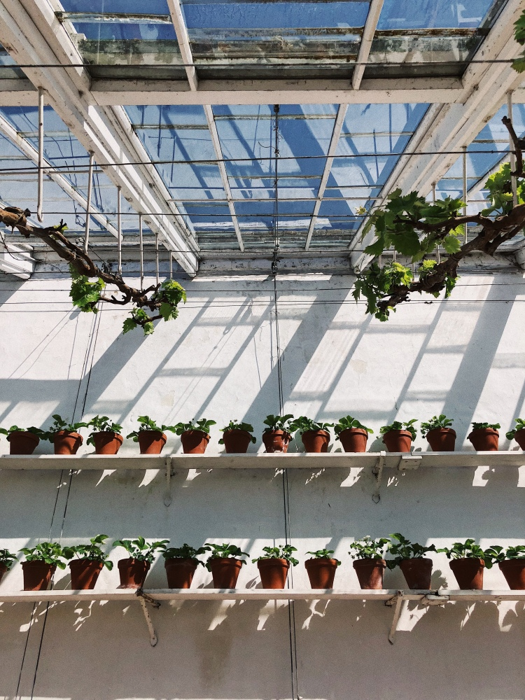 Audley End House and Gardens - A day trip from London, Too Many Plants Blog