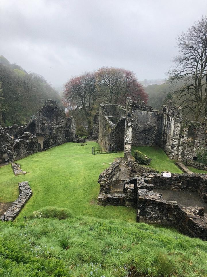 Too Many Plants Blog - Corwnall & Devon (Okehampton Castle))